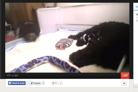 Lotus webcam cutout
