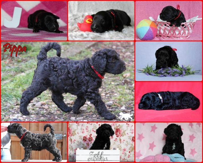 Collage Pippa Logo