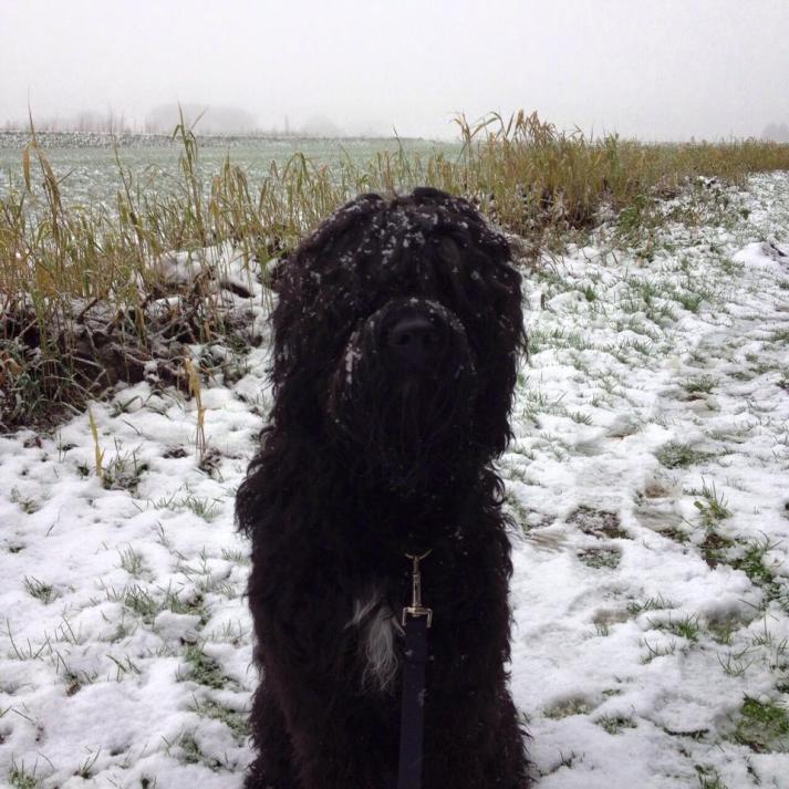 Pippa 1 jaar