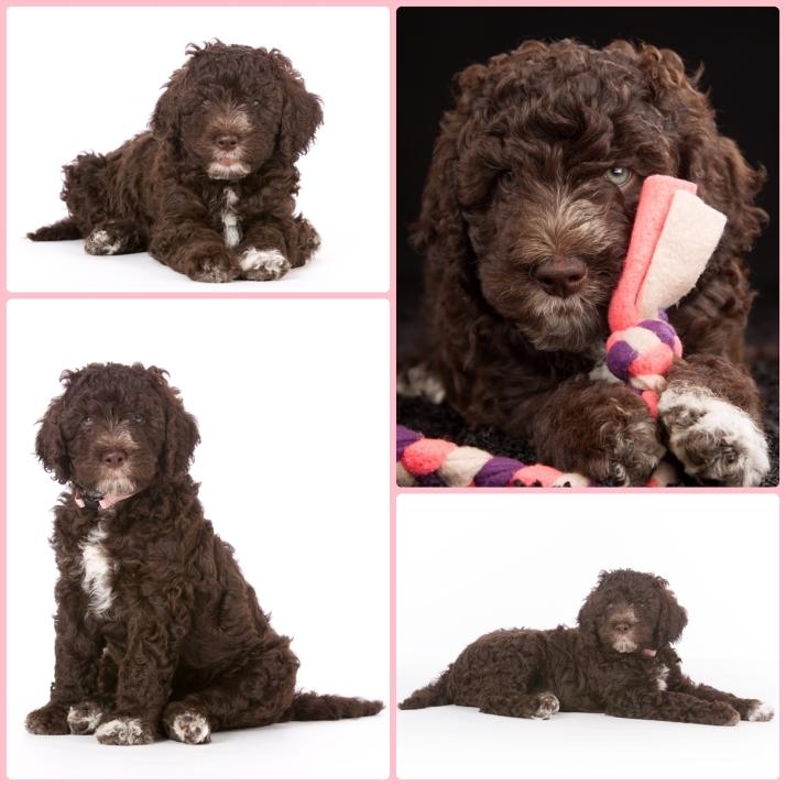Blog puppyfoto