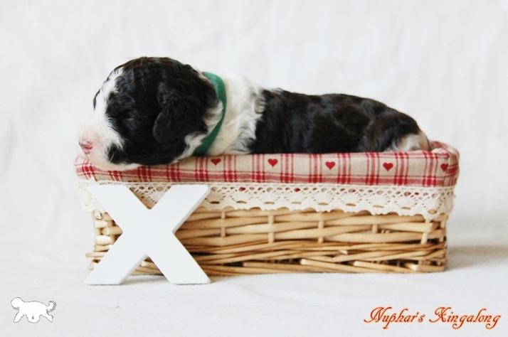 Blog Portret X