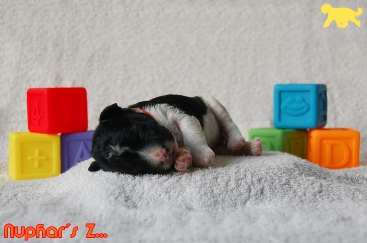 Blog Portret Z DSC_0819