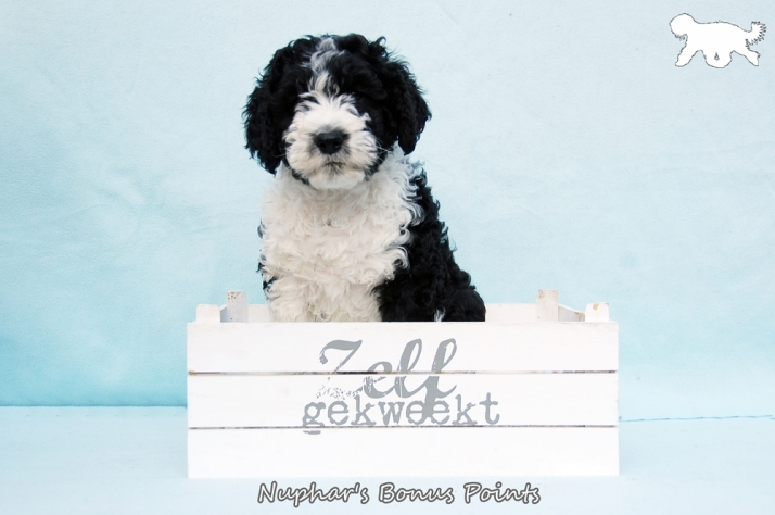 Blog Logo met tekst Portret B