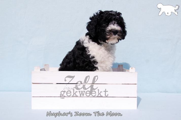 Blog Logo met tekst Portret Z